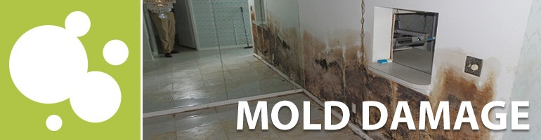 mold south florida