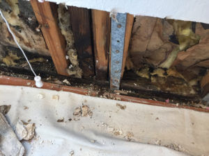 case-study-4a-water-and-mold-damage