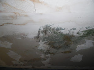 does house insurance cover mold